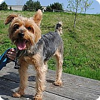 Adopt A Pet :: Jax - Grayslake, IL