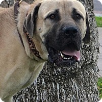 Adopt A Pet :: Barry - Goodyear, AZ