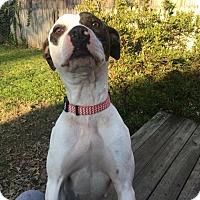 Adopt A Pet :: Alice - Covington, TN