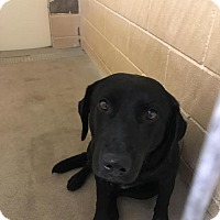 Adopt A Pet :: Rockie - New Braunfels, TX