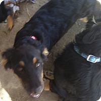 Adopt A Pet :: mia - temecula, CA