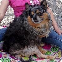 Adopt A Pet :: Dude - Jamestown, TN