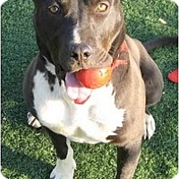 Adopt A Pet :: Jesse James - Toluca Lake, CA