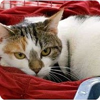 Adopt A Pet :: Portia - Chesapeake, VA