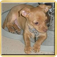 Adopt A Pet :: Migelito - Scottsdale, AZ