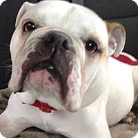 Adopt A Pet :: Henry - Strongsville, OH
