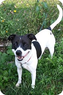 Terrier (Unknown Type, Medium)/Labrador Retriever Mix Dog for adoption in Oberlin, Ohio - Della