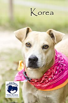Staffordshire Bull Terrier Mix Dog for adoption in Orangeburg, South Carolina - Korea