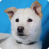 Adopt A Pet :: Willie - Minneapolis, MN