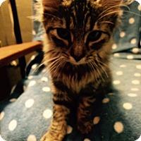Adopt A Pet :: Kira - Delmont, PA