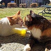 Adopt A Pet :: Eddie Spaghetti - Horsham, PA
