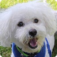 Adopt A Pet :: Willie - La Costa, CA