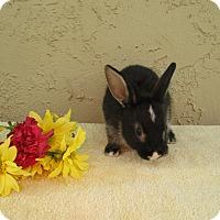 Adopt A Pet :: Macaroni - Bonita, CA