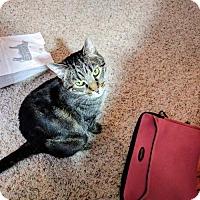 Adopt A Pet :: CAT-Jasper - Denver, CO