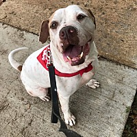 Adopt A Pet :: Lester - Coral springs, FL