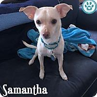 Adopt A Pet :: Samantha - Kimberton, PA