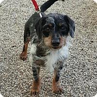 Adopt A Pet :: Cary Grant - Mukwonago, WI
