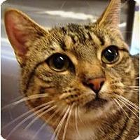 Adopt A Pet :: Clatilda - Albany, NY