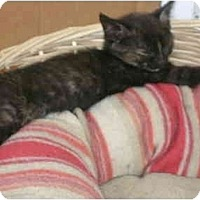 Adopt A Pet :: little girl - Etobicoke, ON