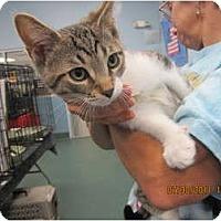 Adopt A Pet :: Miles(super friendly) - Sterling Hgts, MI