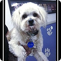 Adopt A Pet :: Amber - Fort Braff, CA