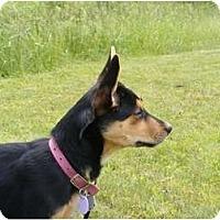Adopt A Pet :: Bernadette - Rigaud, QC