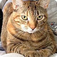 Adopt A Pet :: TT - Alexandria, VA