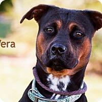 Adopt A Pet :: Vera - Cedar Rapids, IA