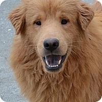 Adopt A Pet :: Wilson - Foster, RI
