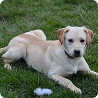 Adopt A Pet :: Brinkley - Lewisville, IN