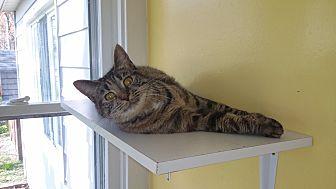 Domestic Shorthair Cat for adoption in Port Clinton, Ohio - Cruella