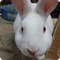 Adopt A Pet :: Pumpkin - Williston, FL