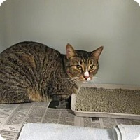 Adopt A Pet :: Stevey - Cumming, GA