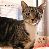 Adopt A Pet :: Smokey - Camden, DE