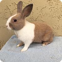 Adopt A Pet :: Pippin - Bonita, CA
