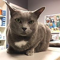 Adopt A Pet :: Zora - Toronto, ON