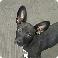 Adopt A Pet :: Maxie - Jacksonville, FL