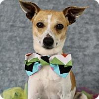 Adopt A Pet :: Patrick - Picayune, MS