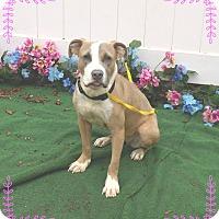 Adopt A Pet :: MINKA - Marietta, GA