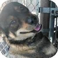 Adopt A Pet :: Harry - Wallaceburg, ON