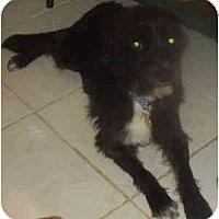 Adopt A Pet :: Toto - Miami, FL