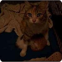 Adopt A Pet :: Piper - Winter Haven, FL