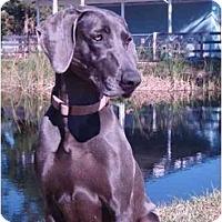Adopt A Pet :: Sassy *Pending Adoption* - Eustis, FL