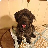 Adopt A Pet :: Buddy - Hazard, KY