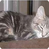 Adopt A Pet :: Tylar - New York, NY