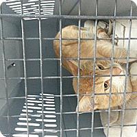 Adopt A Pet :: Mitch - Walnut, IA