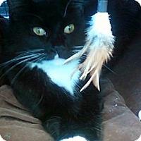 Adopt A Pet :: Sally - Alexandria, VA