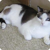 Adopt A Pet :: Maxwell - Glenwood, MN