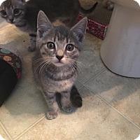 Adopt A Pet :: Titan - Richmond, VA