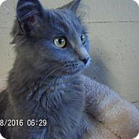 Adopt A Pet :: Twinkle-Adoption pending! - Bridgeton, MO